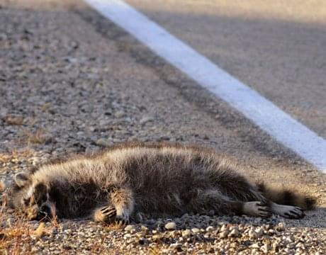Roadkill Removal   Worst Jobs EVER