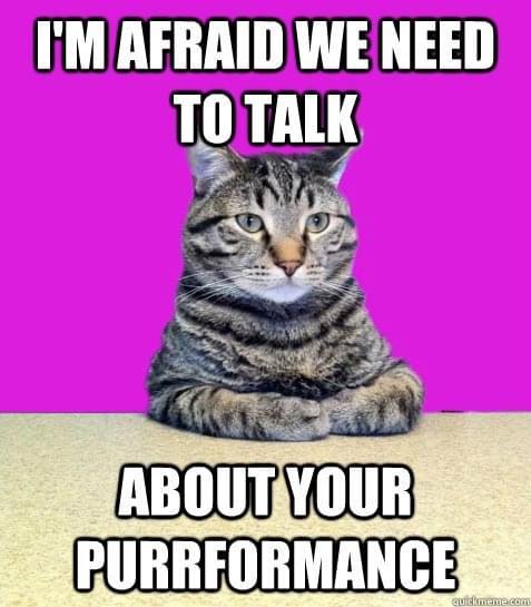 Cat Lurking Meme