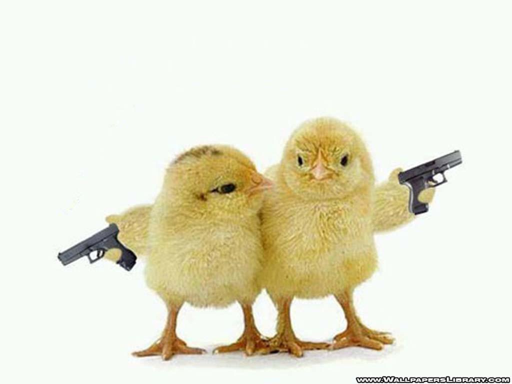 armed-chicks-funny-wallpaper-9