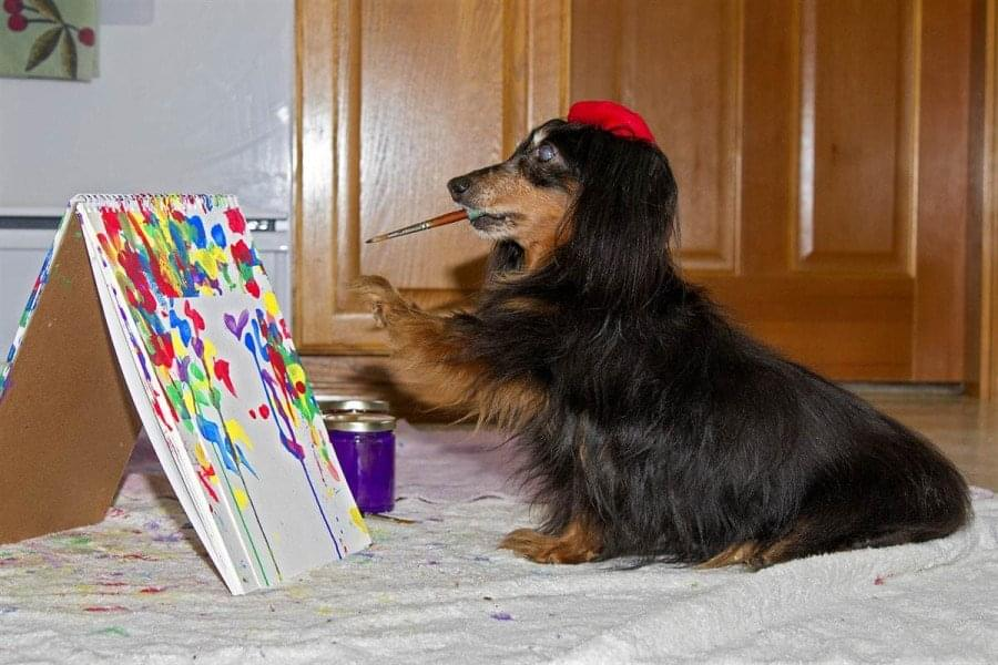 Painter-pooch-900x600