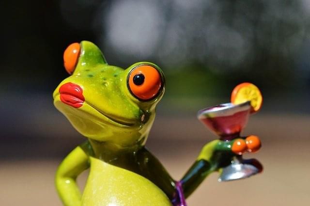 frog-881670_640
