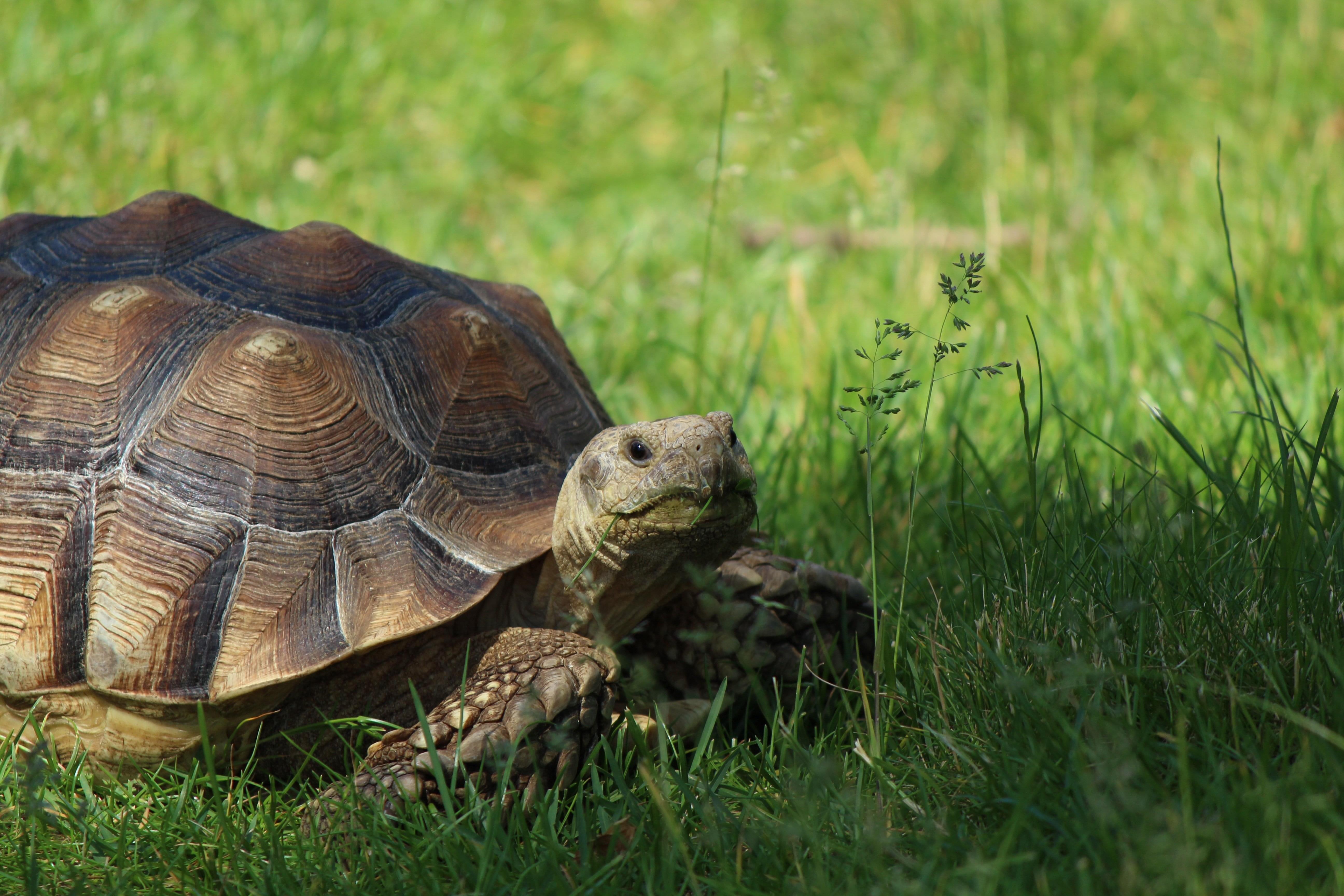 tortoise-slow-start-recruitment