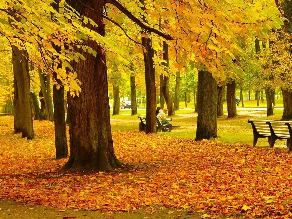 autumn-scene-222251_960_720