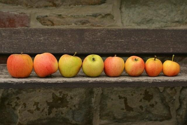 apple-1675775_640