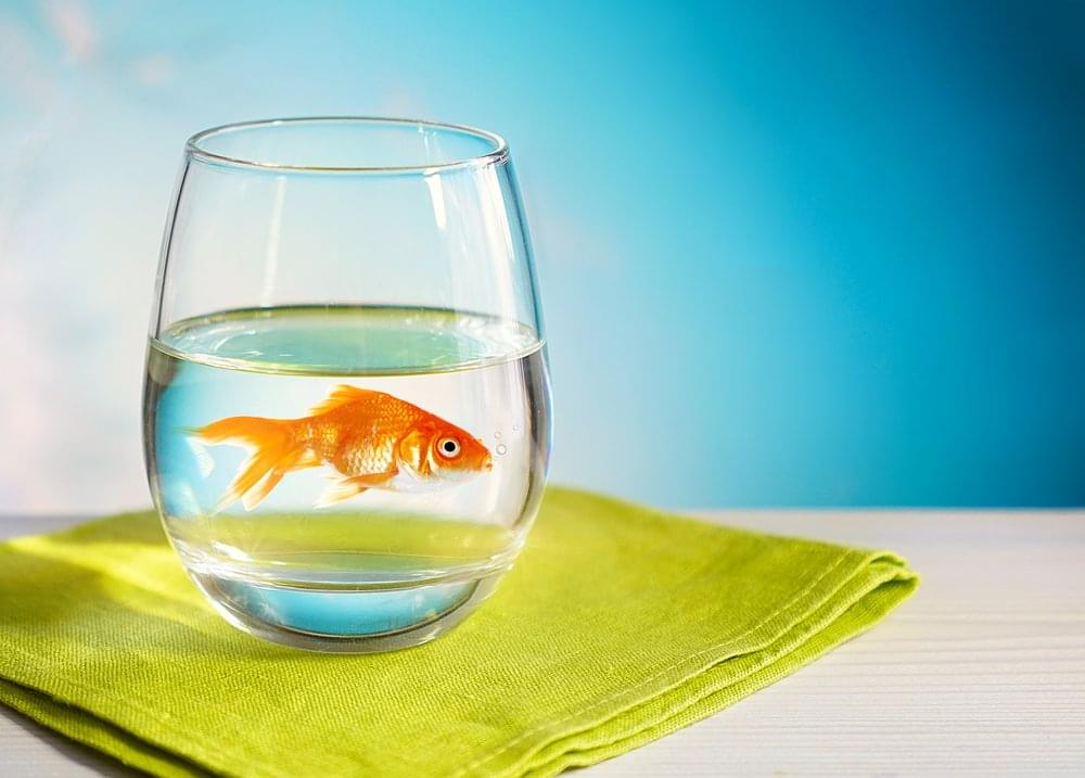 office fish