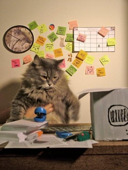 Recruiter Cat A Photo Story Social Talent