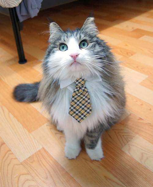 Wow Recruiters And Land Interviews: Recruiter Cat: A Photo Story